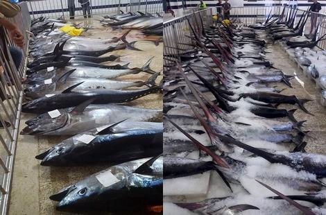 ميناء الحسيمة يستقبل أطنان من الأسماك ويدفعها لمعامل التصبير خارج المنطقة