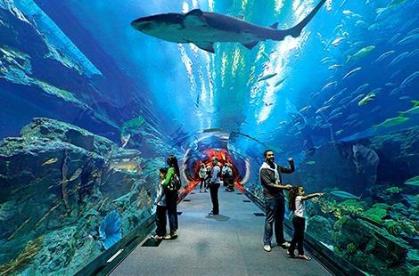 رصد مليار و100 مليون سنتيم لإحداث أحواض متحف الأسماك في بحر الحسيمة