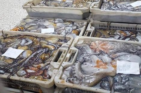 جمعويون بميناء الحسيمة يشككون في طراوة مفرغات الأخطبوط بعد انصرام الراحة البيولوجية