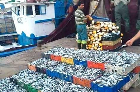 تراجع مفرغات الأسماك وارتفاع قيمتها بموانئ الشمال