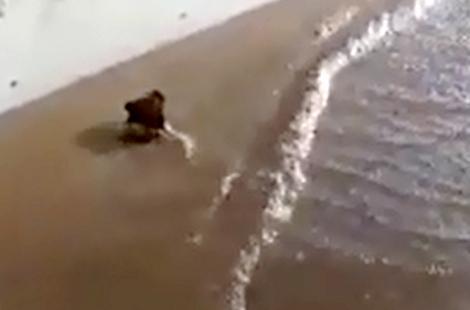 سيول قوية تجرف مواطن قرب ميناء الحسيمة +(فيديو)